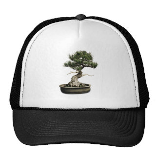 Bonsai Hat