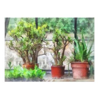 Bonsai in Greenhouse Custom Announcements