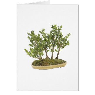 Bonsai Photo 3 Card