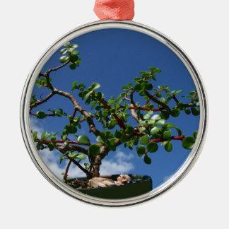 Bonsai portulacaria afra tree 1 christmas ornaments