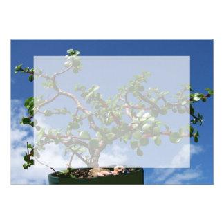 Bonsai portulacaria afra tree 1 invitations