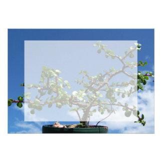 Bonsai portulacaria afra tree 2 card