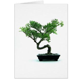 Bonsai Tree Cards