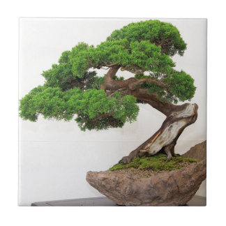 Bonsai tree- natural small square tile