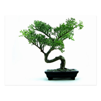 Bonsai Tree Postcard