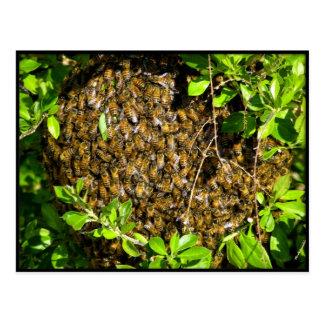 """""""BOO-BEE""""...wrong kind God :) Postcard"""