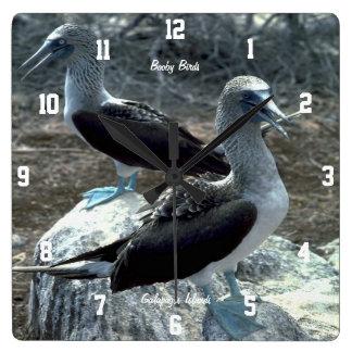 Booby Birds Square Wall Clocks