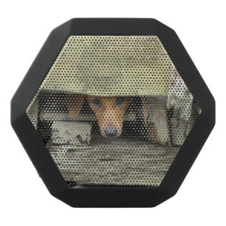 Boombot REX Bluetooth Speaker - Stray Dog