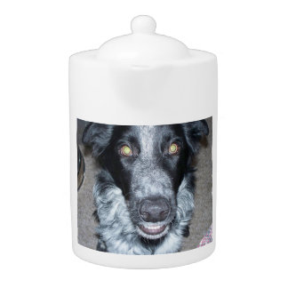 border collie 2.png