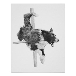 Border Collie Agility Dog Canine Art Dog Drawing Poster