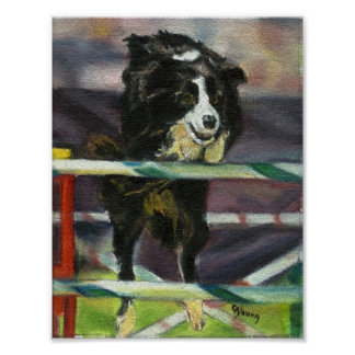 Border Collie Agility Dog Portrait Poster