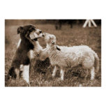 """""""Border Collie and Lamb""""~Poster"""