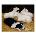 Border Collie and Sheep Dog Art Print