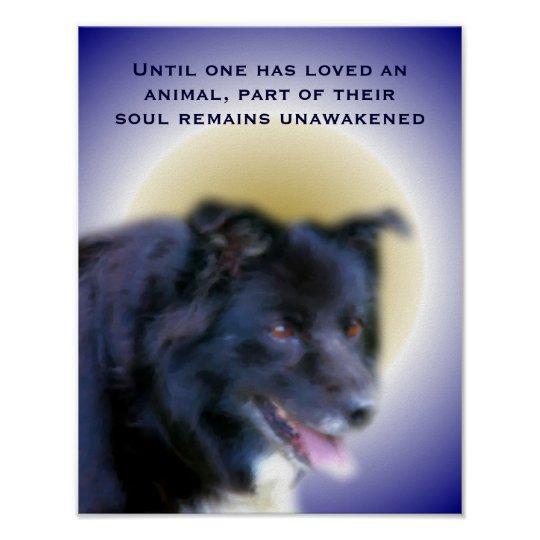 Border Collie Animal Love Inspirational Quote Poster