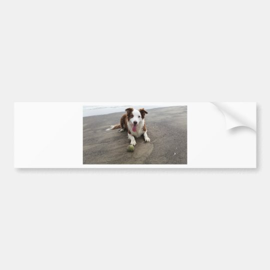 Border collie at the beach bumper sticker