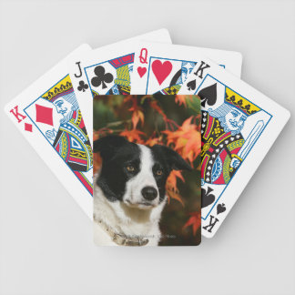 Border Collie Autumn Headshot Bicycle Playing Cards
