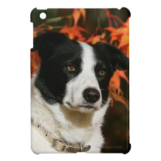 Border Collie Autumn Headshot Cover For The iPad Mini