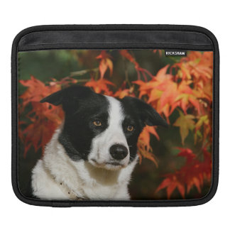 Border Collie Autumn Headshot iPad Sleeve