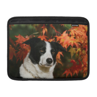 Border Collie Autumn Headshot MacBook Sleeve