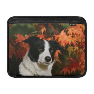 Border Collie Autumn Headshot MacBook Sleeves