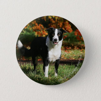 Border Collie Autumn Standing 6 Cm Round Badge