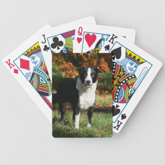 Border Collie Autumn Standing Bicycle Playing Cards