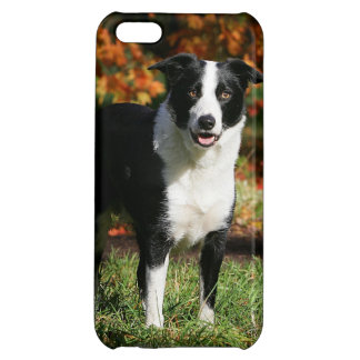 Border Collie Autumn Standing Case For iPhone 5C
