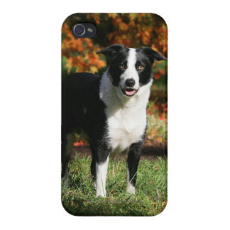 Border Collie Autumn Standing iPhone 4/4S Covers