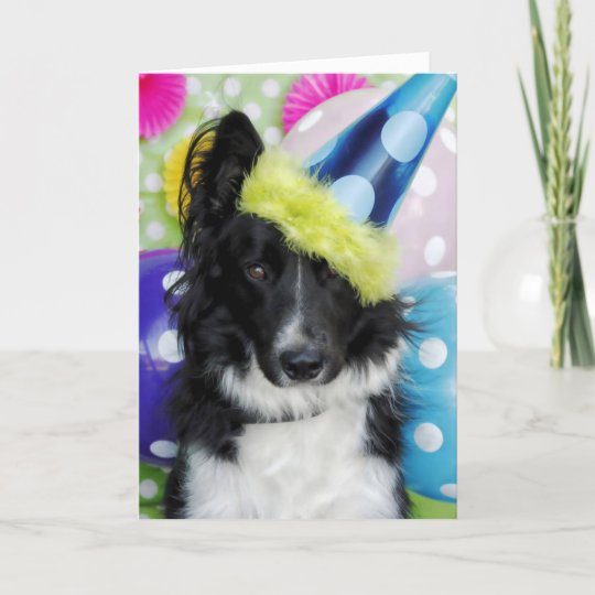 border collie birthday card  zazzlecouk