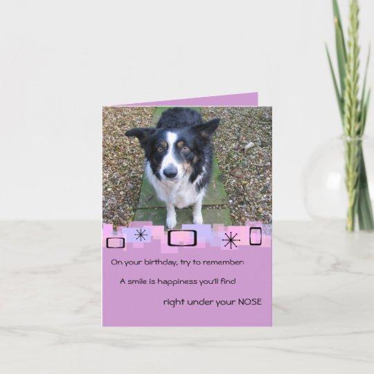 border collie birthday greeting card  zazzlecouk