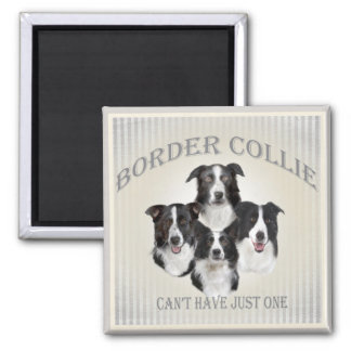 Border Collie Can't Have Just One Gifts Square Magnet