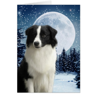 Border Collie Card