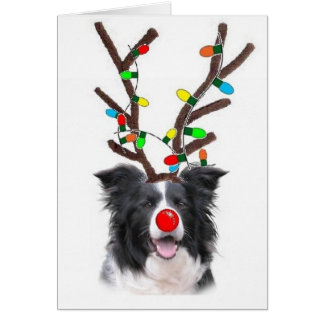 Border Collie Christmas Card~Rudolph Greeting Card