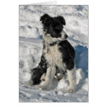 Border Collie Christmas Note Card