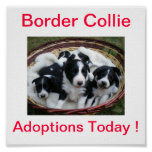 Border Collie Dog Adoptions Today Sign Poster