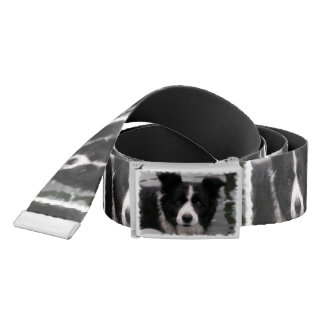 Border Collie Dog Belt