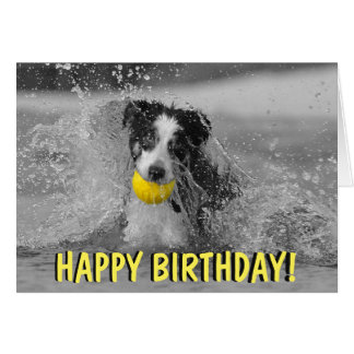 Border collie dog birthday card