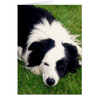 Border Collie - Dog card