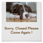 Border Collie Dog Closed Business Sign Poster