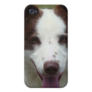 Border Collie Dog iPhone Case iPhone 4/4S Cases