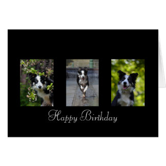 Border Collie dog lovers custom birthday card