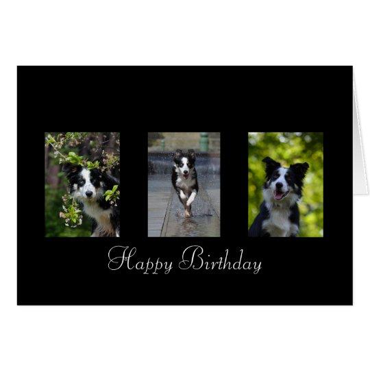 Border Collie dog lovers custom birthday card
