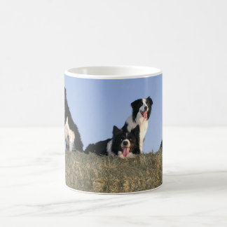 Border Collie Dog Lovers Photo Mug