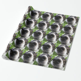 Border Collie Dog Nose Wrapping Paper