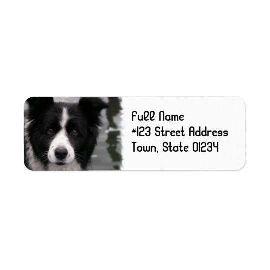 Border Collie Dog Return Address Label