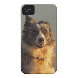 Border Collie Dog Running BlackBerry Bold Case