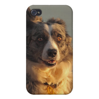 Border Collie Dog Running iPhone 4 Case