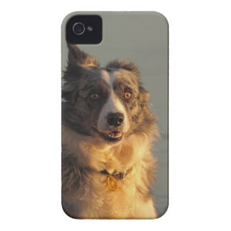 Border Collie Dog Running iPhone 4 Case-Mate ID iPhone 4 Case
