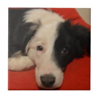 border collie dog small square tile