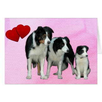 Border Collie Dogs Heart Greeting Card